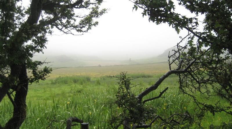 irland im Nebel