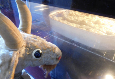 Shepherd's Pie – einfach lecker